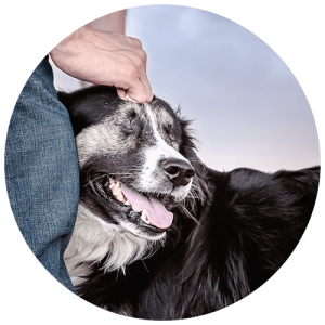 Calgary dog photographer supporting local rescue organizations