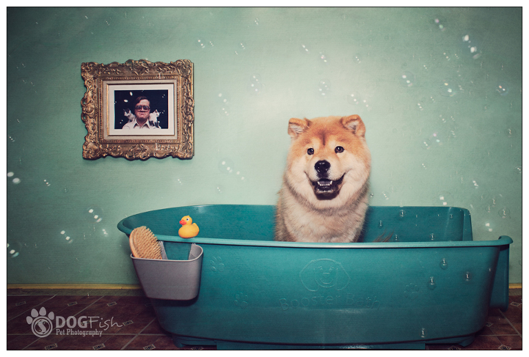 Vintage-style photograph of a chow chow and bubbles