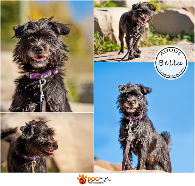Photograph of Bella the Terrier an adoptable dog in Calgary