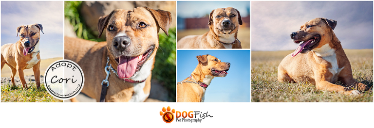 Adoptable pet photograph by Calgary dog photographer