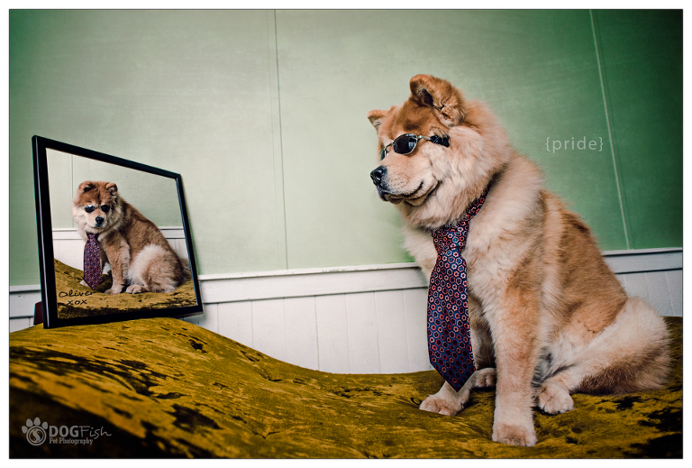 Image of Calgary dog Oliver the chow chow | lifestyle pet photography
