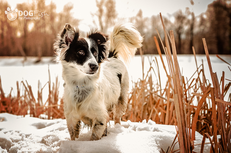 Beautiful outdoor pet photography