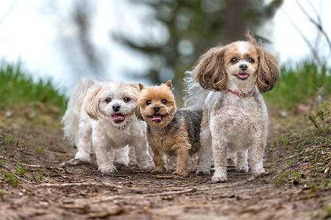 Portrait of three sweet dogs by Calgary dog photographer