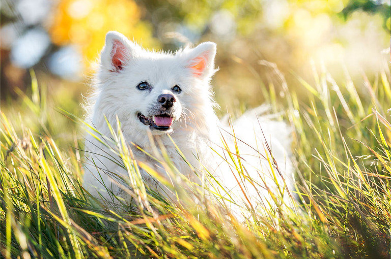 Beautiful pet images in Calgary, Bragg Creek and Airdrie