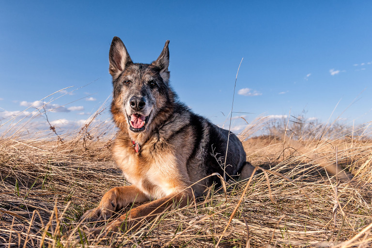 Modern and fun dog photographer in Calgary, Alberta, Canada