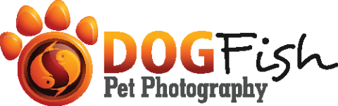Dogfish Pet Photography
